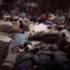 News & Guts banner: Refugees